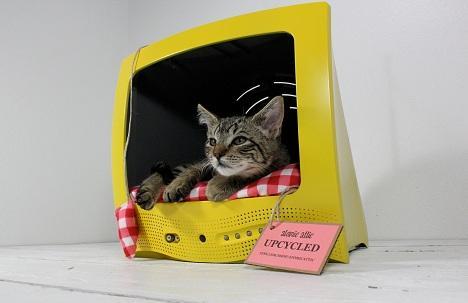 Recycler une vieille télé maison pour son chat